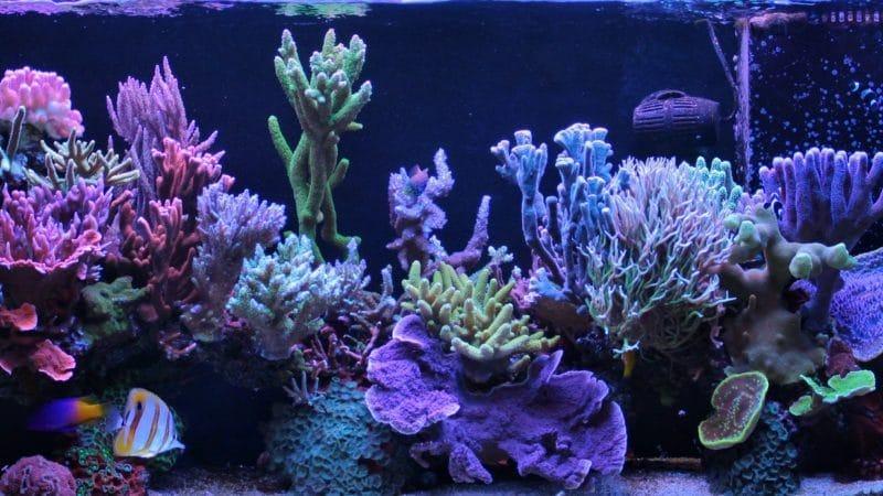 akwarium morskie wapno sodowane pochlaniacz co2
